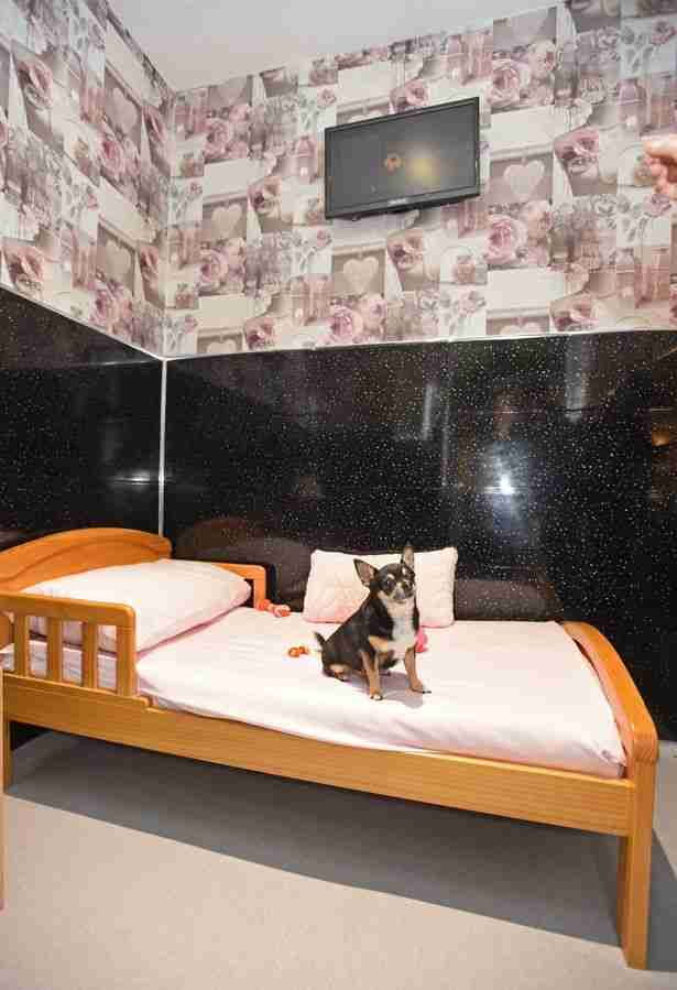 Each dog gets their own room with a TV and real bed! no more kennels rebeckah vaughan